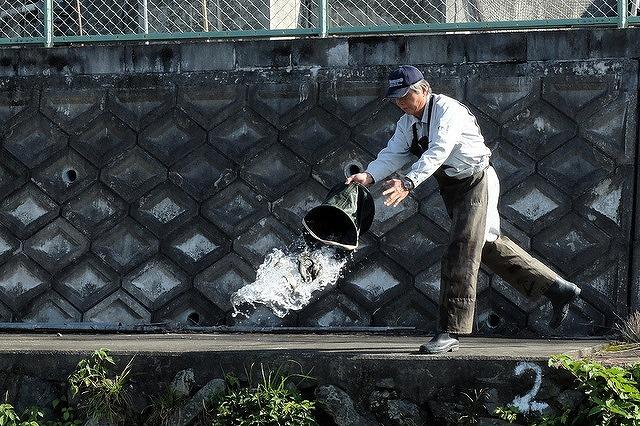 高槻の芥川のマス釣り