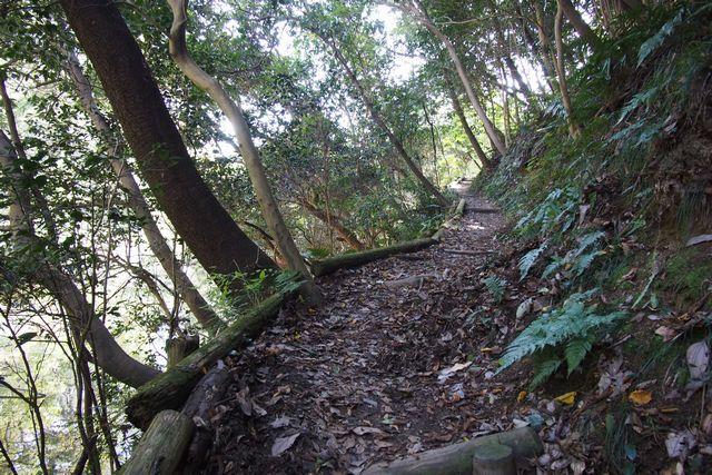 大阪府民の森 緑の文化園むろいけ園地でトレッキング