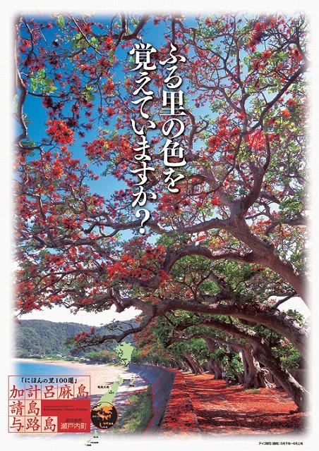デイゴ並木のポスター